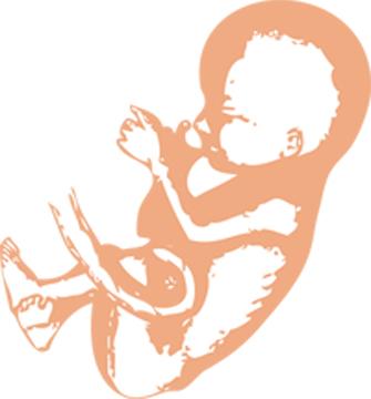 Arkansas law sets precedent for abortion legislation