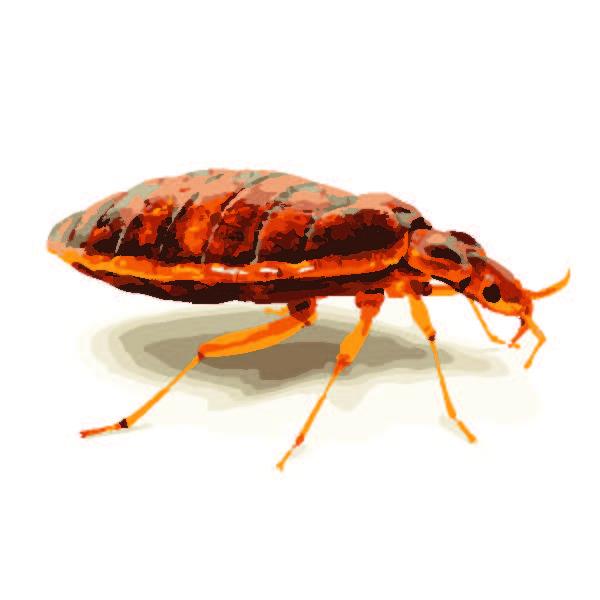 Bedbugs burn